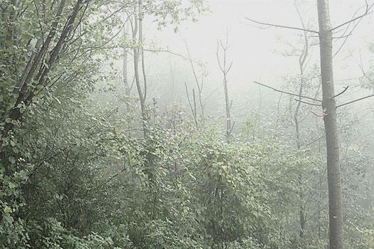 2010_Nebel